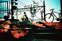 -Crossing the season (Hodaka Yamamoto) Tags: street autumn flower station bicycle silhouette lomo lca lomography crossprocessed doubleexposure crossprocess double lomolca multipleexposure crossprocessing cosmos doubles multiexposure