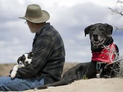 gettin' lucky (sage and spirit) Tags: dogs lucky blacklab labradorretriever durango rezdog mrsage