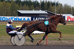 IMG_2261 (lovelymelancholy) Tags: horses horse hevoset hevonen horseraces ravit imrautio ravihevonen