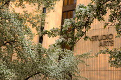 Spring Campus Flowers-27