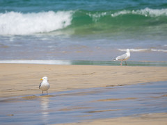 Separation (schauplatz) Tags: couple surf waves seagull paar mwe seashore vogel wellen brandung silbermwe