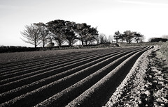 Half ploughed field. (sidibousaid60) Tags: uk blackandwhite bw blancoynegro field lines landscape cornwall lowsun furrows ploughed rosudgeon