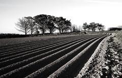 Half ploughed field. (sidibousaid60) Tags: uk blackandwhite bw blancoynegro field lines landscape cornwall lowsun furrows ploughed rosudgeon