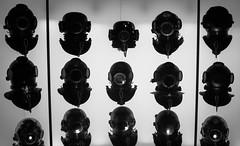 IMG_7608 (Welshmenphotos) Tags: life sea summer vacation portrait fish glass museum canon keys photography bay underwater florida dolphin dive lion pelican exhibit exotic islamorada macaw parrots tarpon trainer sl1 parrotfish morada 2016 robbies 100d