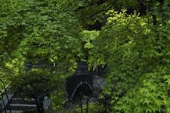 (photomovin) Tags: podcast japan radio sigma itunes photowalk niigata foveon x3f photowalking sigmaphotopro dp2m dp2merrill photomovin