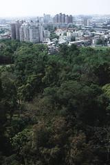 # (David C W Wang) Tags: tree taiwan structure lookdown  chiayi   sigma50mm    sonya7ii