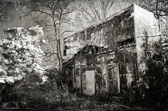Burn me alive (Damon D. Edwards Photography) Tags: blackandwhite bw white black overgrown nikon louisiana poetry country rustic burn faded heavy d7000