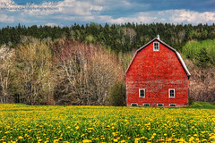 Blue Green Red and Yellow (sminky_pinky100 (In and Out)) Tags: blue red canada green yellow rural landscape outdoors pretty novascotia scenic colourful bard dandelions balmoralmills omot cans2s
