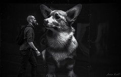 Face to face (melaania) Tags: dog