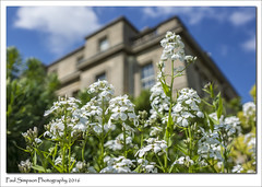 Spring at Normanby Hall (Paul Simpson Photography) Tags: nature spring bluesky springflowers whiteflowers springflower niceweather northlincolnshire photosof imageof normanbyhall normanbypark photoof imagesof sonya77 paulsimpsonphotography may2016