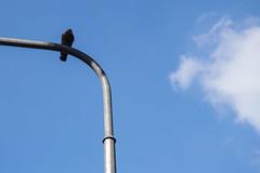 271/365 City hawk (darioseventy) Tags: city blue light sky urban bird animal clouds nuvole shadows streetlamp blu ombre cielo minimalism minimalismo animale piccione luce pidgeon lampione uccello outdooor
