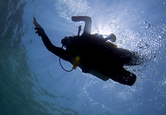 Craig Wood (KnyazevDA) Tags: sea underwater wheelchair scuba diving disabled diver padi undersea handicapped amputee disability