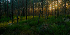 In to the Woods (Ludvius) Tags: sunset nature forest woods ludovicophotography wwwludovicophotocom