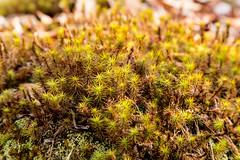 Moss close up (ronnymariano) Tags: newyork nature closeup forest moss spring unitedstates hiking lichen 2015 harrimanstatepark sloatsburg harrimanpark khiking