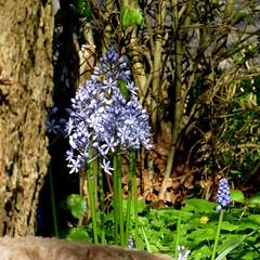 (Landanna) Tags: flower tree texture spring tr boom lente blomst bloem forr lentekriebels