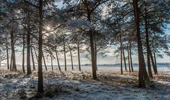 Dwingelderveld (Kees Waterlander) Tags: winter snow netherlands sneeuw nl hdr drenthe dwingeloo