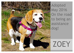 Zoey-adopted (Ali Crehan) Tags: dog may shelter adopted 2016