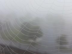 Hand Stitched (SaltyDogPhoto) Tags: mist macro nature wet water weather misty fog photography drops dof web spiderweb foggy samsung depthoffield dew waterdrops webs photooftheday samsungs6 saltydogphoto