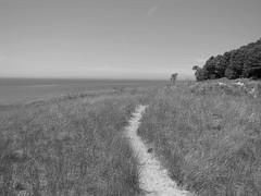 (amandamae24) Tags: trees summer blackandwhite lake tree beach nature waves michigan wave