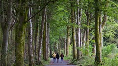 A Walk in Coole Park, 1 (Michael Foley Photography) Tags: park ireland lady cogalway yeats gregory coole coclare