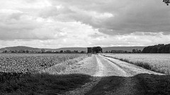 (salparadise666) Tags: analog germany nikon natur hannover nils land 100 agfa region landschaft apx f4 cl schwarz niedersachsen weis caffenol calenberger volkmer