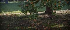 a fairer world ... (sermatimati) Tags: world poverty red bw white black roma tree verde green nature nude photography mar justice junk colore earth bare fame natura blow giallo solidarity difference damage huge production produce denial waste splash fotografia refuse gigantic albero consumismo scrap rosso frutta prato bianco nero consumerism marcio rejection reject photographing discard equality arancione loiter povert matura selfie refusal fritter spoil fotografare fairness lavish miseria squander buona albicocche uguaglianza spreco buonissima dilapidate sprecare sermatimati putoneselfout misspend wasteonesenergy