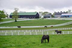 My Old Kentucky Home (shirley319) Tags: horse barn fence unitedstates lexington kentucky may nationals equestrian 2016 d600 horsecompetition ihsa kentuckyhorsepark