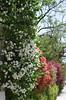 Flowers in Villa, Ta' Xbiex (RobJH82) Tags: sea summer sun hot island europe mediterranean malta heat taxbiex