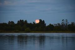Strawberry Moon (careth@2012) Tags: moon scenery view britishcolumbia scenic scene strawberrymoon