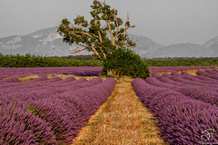Missing Provence - 11 (BeNowMeHere) Tags: trip travel flowers summer france color colour nature landscape colorful village lavender colourful provence 500px ifttt benowmehere missingprovence