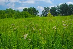 Meadow (wackybadger) Tags: bluesky wisconsinstatenaturalarea nikon sky nikon1855mmf3556gafsvr wisconsin nikond60 trempealeaurivermeadowsna sna346 buffalocounty meadow grass clouds