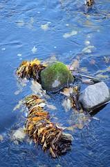 image (Kerstin Nyström) Tags: foto photos natur å vatten höst löv naturfoto höstlöv norrtäljeån höstiån lövivattnet färgstarktfoto lövansamling