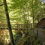 Garmisch - Partnachklamm (16) - Weg oberhalb der Klamm durch die »grüne Hölle« thumbnail