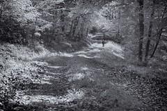 Autoportrait en promeneur solitaire. (dominique.miltat) Tags: autoportrait chemin fort solitaire promeneur