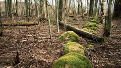 Skogsrets stig (krissen) Tags: nature forest moss spring soft seasons path bare natur folklore skog vnern stig vr hammar mossa stenar hiddenpath huldra forestspirit huldufolk hulder mjukt mjuk fotosondag skogsret fs150419 gmdvg hemligstig hammarssydspets