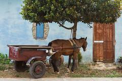 horse (BigZoic) Tags: street horse canon landscape cheval eos cuba cuban vinales 1740 vignales 60d