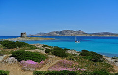 Caribbean colors in Sardegna. (Kat-i) Tags: sardegna italien flowers blue italy tower beach water strand islands wasser turquoise blumen hills blau kati turm sardinien mediterraneansea segelboot katharina sailingboat hügel türkis inseln stintino 2015 mittelmeer lapelosa nikon1v1