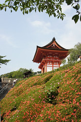 Kiyomizudera gate over a sea of azaleas (Mrs'icks) Tags: japan kyoto gate sony   azalea kiyomizudera sonynex5 2015holidayday13