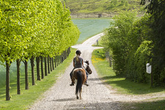 Ridetur ved Ry 2016 (Appaz Photography ) Tags: trees horses horse plants tree animals denmark trer mammals ry hest dyr jylland heste pattedyr appazphotography