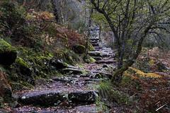 The Path to Glory (jcfasero) Tags: espaa naturaleza tree nature landscape spain nikon arboles camino path ngc galicia melon sendero ourense meln pozas camio nikon1j5
