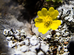 This little flower is for my dear friend Maurice. It's my way to thank you for your kindness and attention. (yolieleka) Tags: flowers light wild espaa plants naturaleza plant flores flower color macro art texture textura nature beautiful beauty yellow closeup contrast canon lights miniature petals spring spain europa europe shadows view floor artistic bokeh outdoor pov hiking colorfull wildlife magic details flor explore textures pointofview leon bosque gift desenfoque serene magical sombras detalles texturas macrophotography airelibre macrofotografia enjoyinglife vidasalvaje enjoytheview dosomethingdifferent todaysflickr