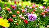 Flower (fikqriey_94) Tags: flowers malaysia stmary sandakan macroshoot sabahan tourismmalaysia pertena mfosin fikrifikiranku
