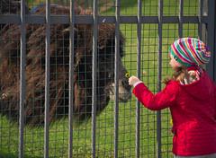 (burovvv) Tags: girl hat camel kindness