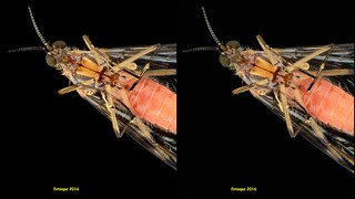 Bottom View mosquito  064708 cross-view 3D