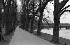 Riverside Walk Avenham Park (Man with Red Eyes) Tags: bridge slr monochrome analog river blackwhite preston hp5 tramway ilford ribble nikonf6 f6 avenham 50mmf12 silverhalide trambridge td201 anchelltroop