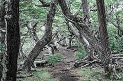 IMGP0418.jpg (gnosmos) Tags: argentinien feuerland patagonien sigmaobjektiv