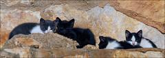 Gatitos al sol