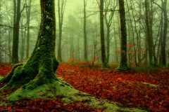 At the foot of the tree! (pat.thom974) Tags: autumn trees red green fog forest