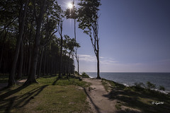 Gespensterwald im Gegenlicht (hph46) Tags: strand germany deutschland buchenwald sony ostsee gegenlicht buche mecklenburgvorpommern norddeutschland nienhagen gespensterwald steilkste alpha7r