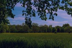 Waiblingen - Talaue (Motiv-Jger) Tags: blue sun green water germany deutschland spring wasser turtle grn blau sonne frhling schildkrte badenwrttemberg waiblingen sonyslta57